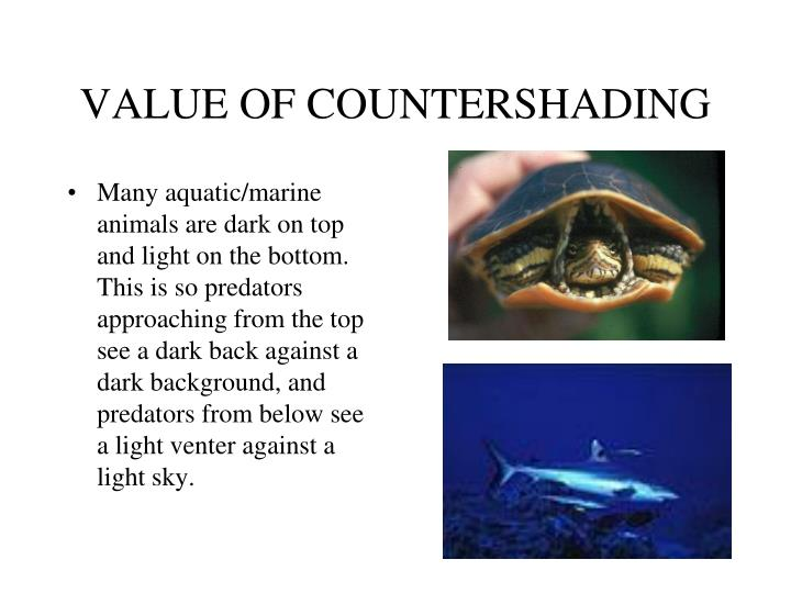 VALUE OF COUNTERSHADING