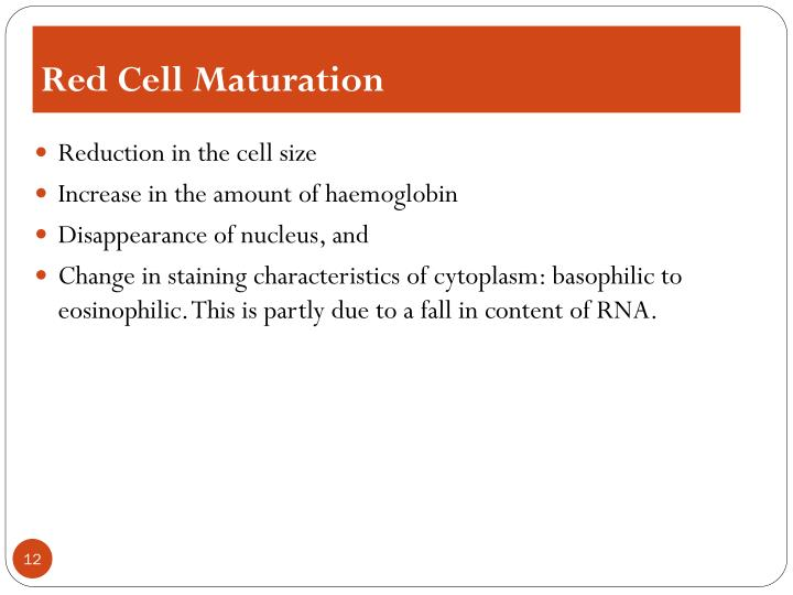 Red Cell Maturation