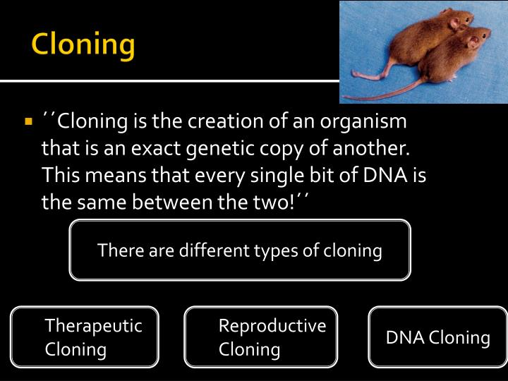 analyzing the ethics of reproductive cloning As janet has just explained the process of reproductive cloning, i will take the last few minutes of my designated time slot to explain the process of therapeutic, or research cloning the idea of therapeutic cloning has arisen to relieve the immunological constraints of current transplantation techniques.