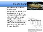 dipnoi lungfish