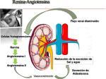 renina angiotensina