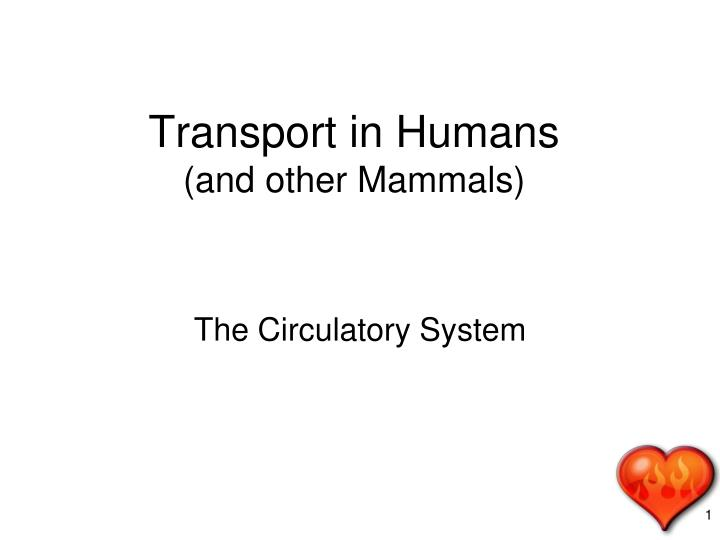 transport in humans and other mammals n.