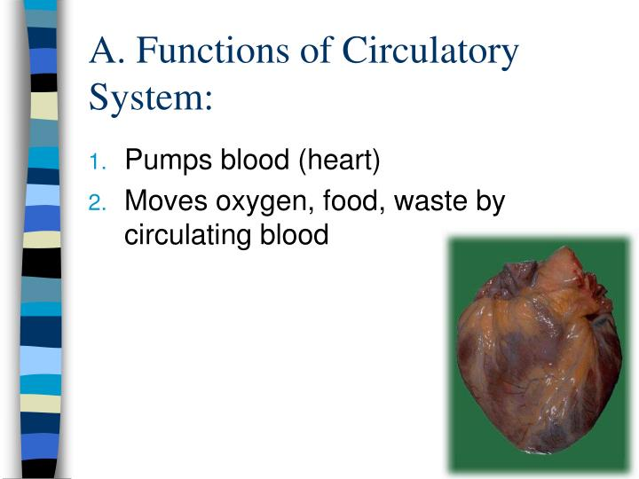 Ppt Circulatory System Powerpoint Presentation Id2258996