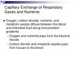 capillary exchange of respiratory gases and nutrients