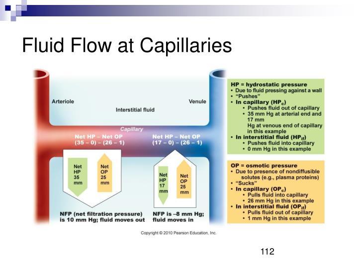 Fluid Flow at Capillaries