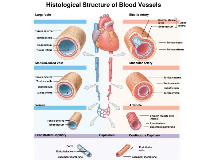 Histological