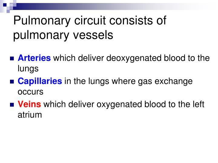 Pulmonary circuit consists of pulmonary vessels