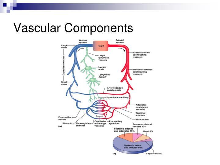 Vascular Components