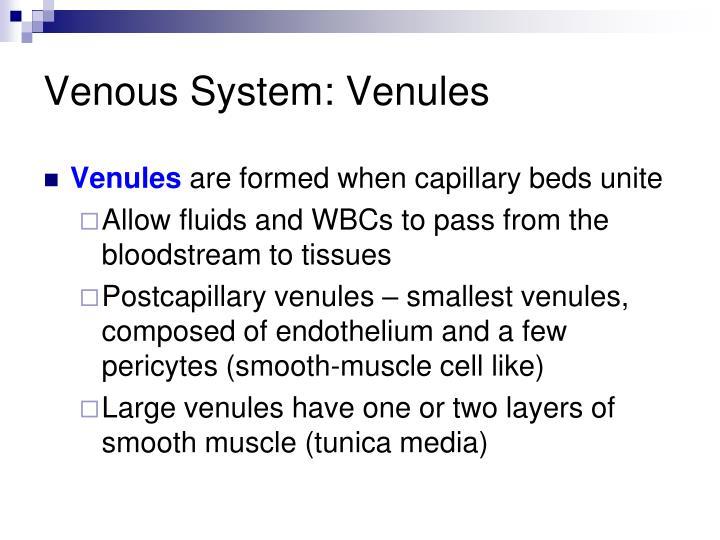 Venous System: Venules