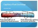 capillary fluid exchange1