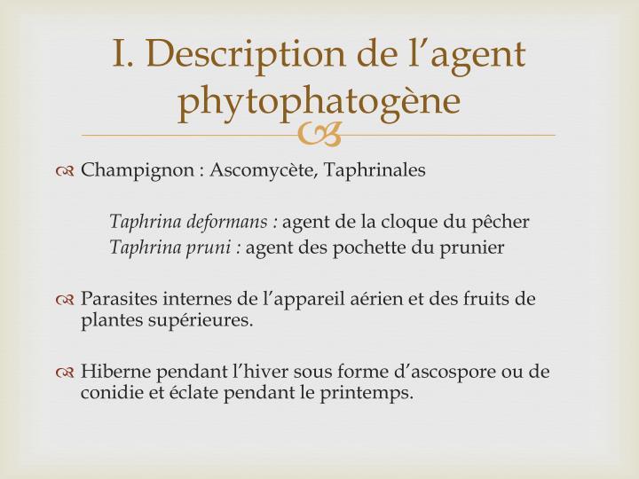 Ppt cloque du p cher et pochettes du prunier powerpoint presentation id 2260304 - La cloque du pecher ...