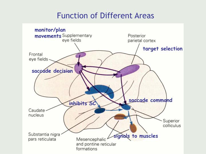 Function of Different Areas