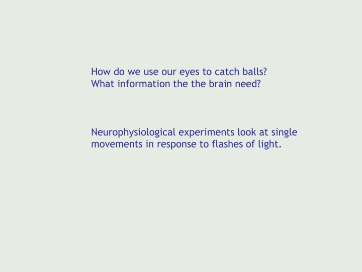 How do we use our eyes to catch balls?