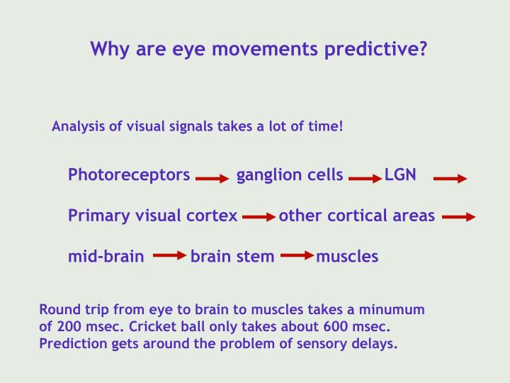 Why are eye movements predictive?