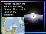 meteor impact in the yucatan peninsula mexico this possibly killed off the dinosaurs
