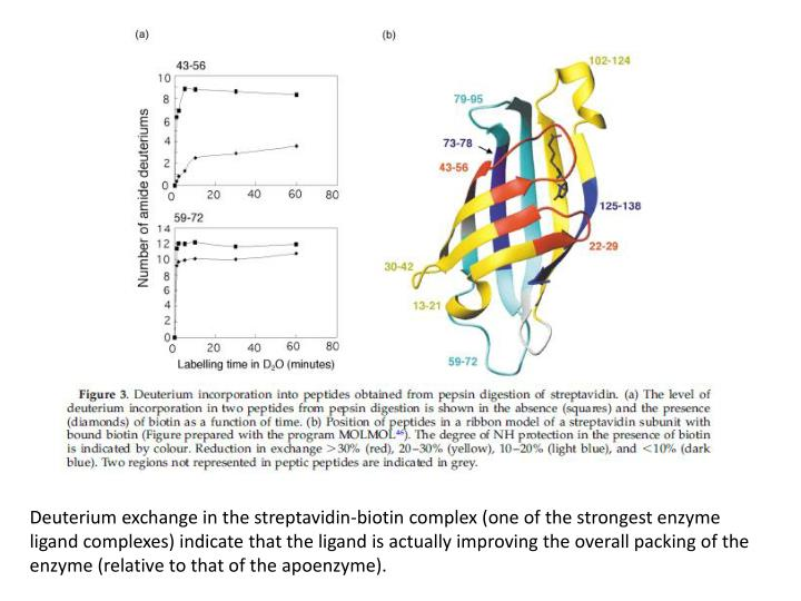 Deuterium exchange in the streptavidin-biotin complex (one of the strongest enzyme ligand complexes) indicate that the ligand is actually improving the overall packing of the enzyme (relative to that of the