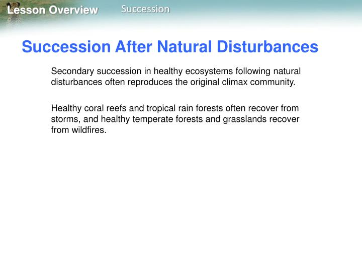 Succession After Natural Disturbances