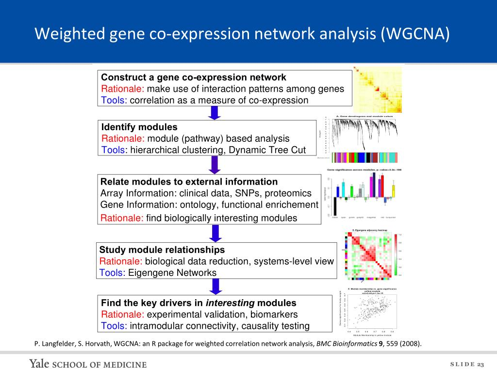 PPT - Network analysis of biological data PowerPoint