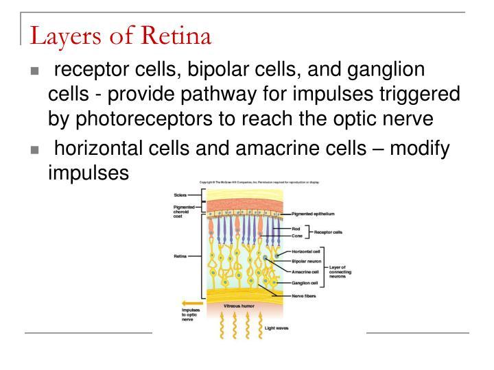 Layers of Retina