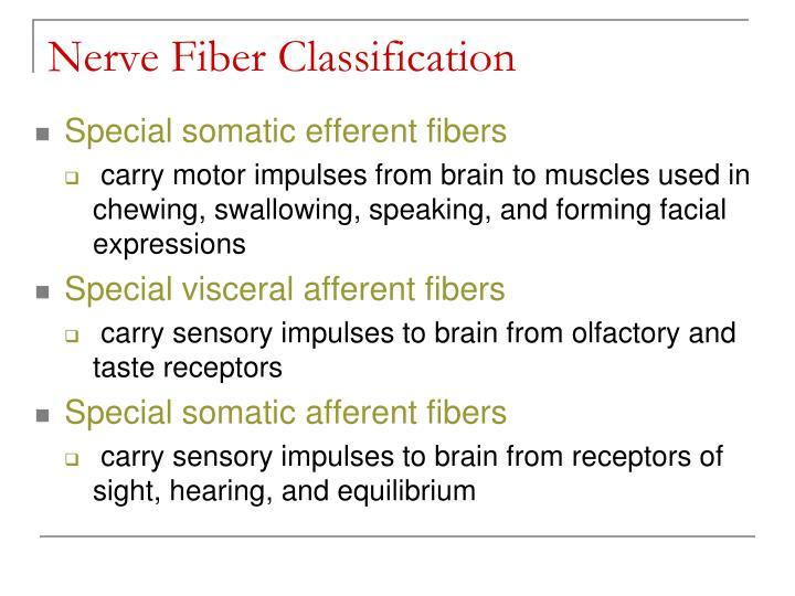 Nerve Fiber Classification