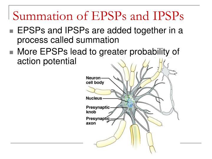 Summation of EPSPs and IPSPs