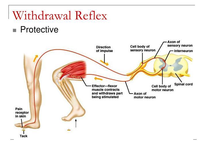 Withdrawal Reflex