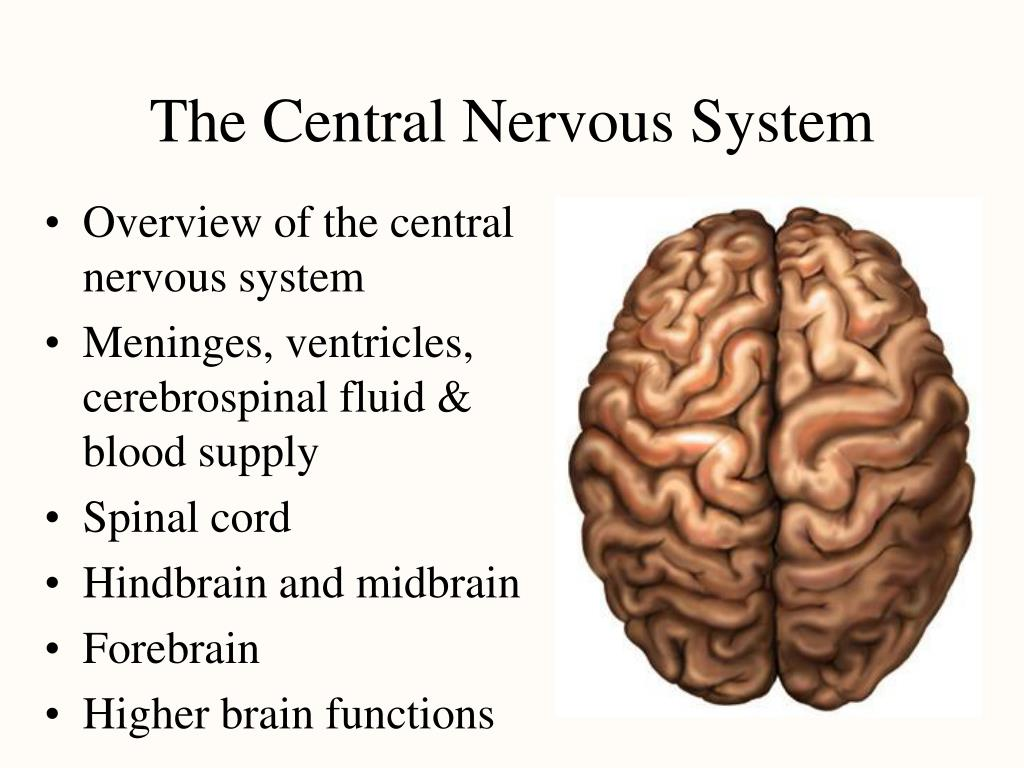 Ppt The Central Nervous System Powerpoint Presentation Id2263900