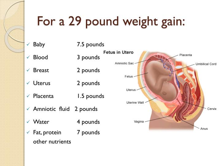 For a 29 pound weight gain:
