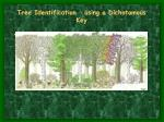 tree identification using a dichotomous key