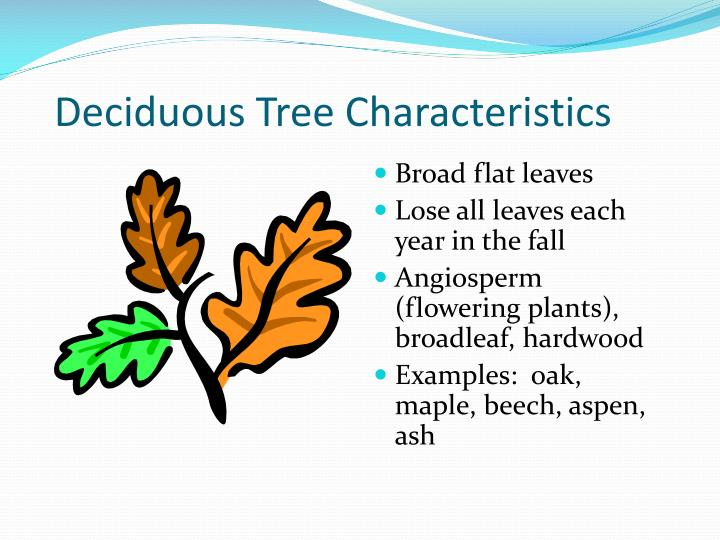 the definition of deciduous