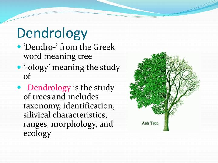 PPT - Dendrology PowerPoint Presentation - ID:2264783