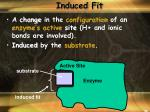 induced fit1