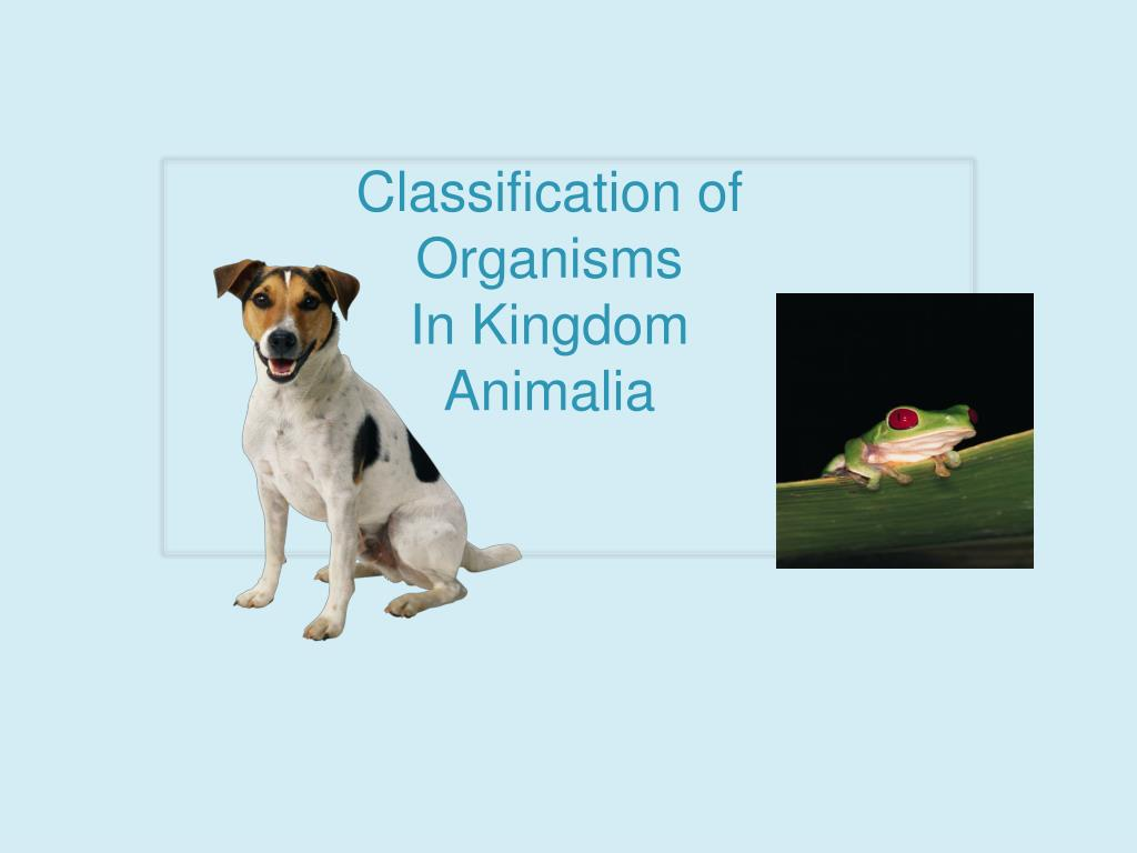 Image of: Characteristics Classification Of Organisms In Kingdom Animalia Powerpoint Ppt Presentation Rbpaonlinecom Ppt Classification Of Organisms In Kingdom Animalia Powerpoint
