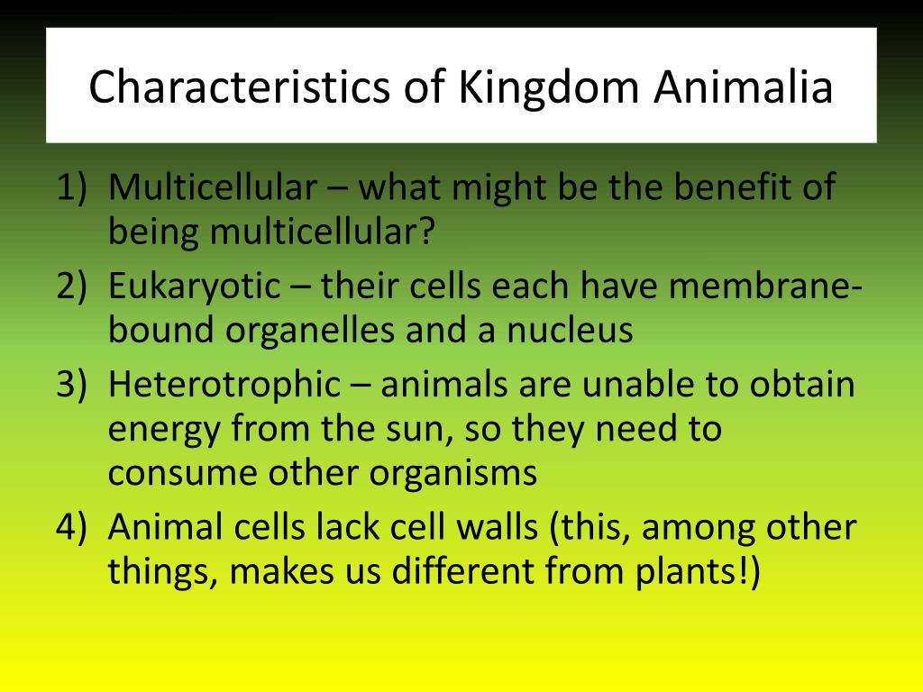 PPT - Kingdom Animalia - Part One PowerPoint Presentation ...