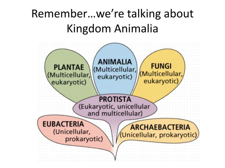 Rememberwere Talking About Kingdom Animalia