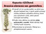 kapusta r i kov brassica oleracea var gemmifera