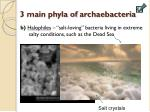 3 main phyla of archaebacteria1