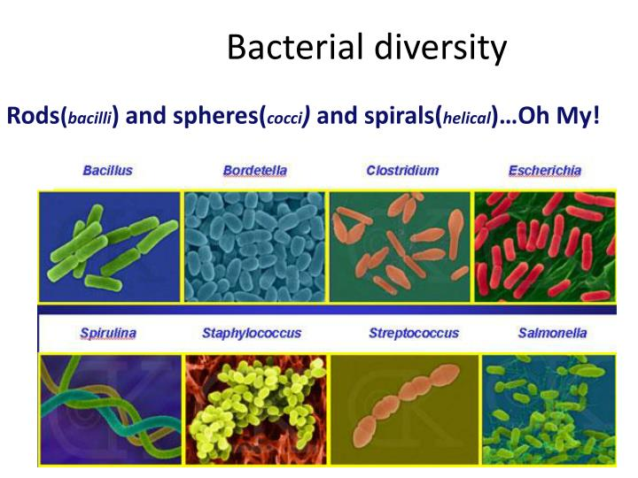 bacterial diversity project Article geospatial resolution of human and bacterial diversity with city-scale metagenomics graphical abstract highlights d almost half of all dna present on the subway's surfaces matches no.