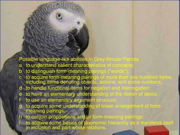 Possible language-like abilities in Grey African Parrots