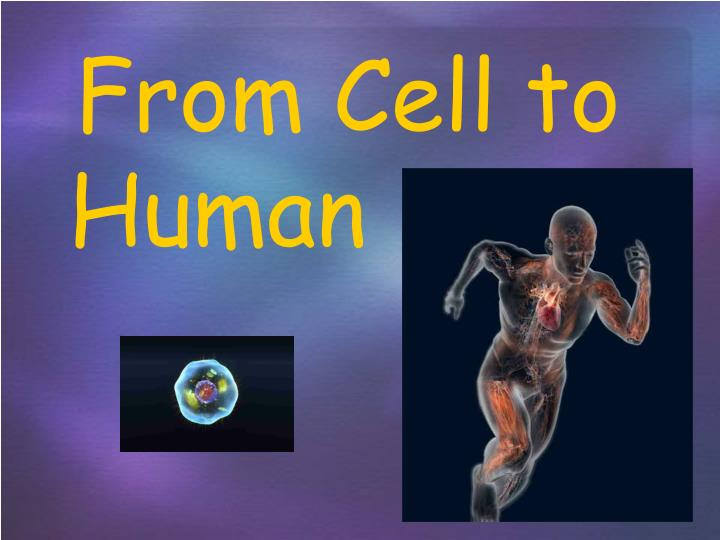 from cell to human n.