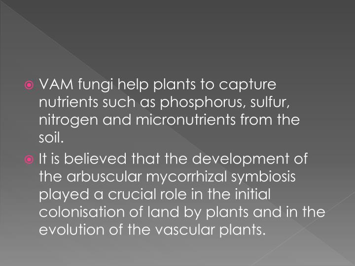 VAM fungi help plants to capture nutrients such as phosphorus,