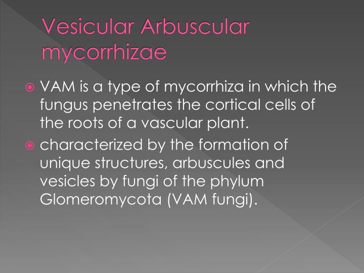 Vesicular arbuscular mycorrhizae