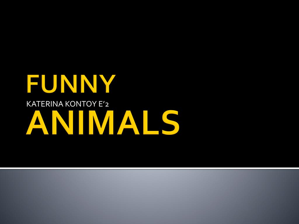 ppt funny animals powerpoint presentation id 2268343