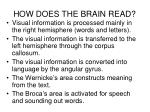 how does the brain read