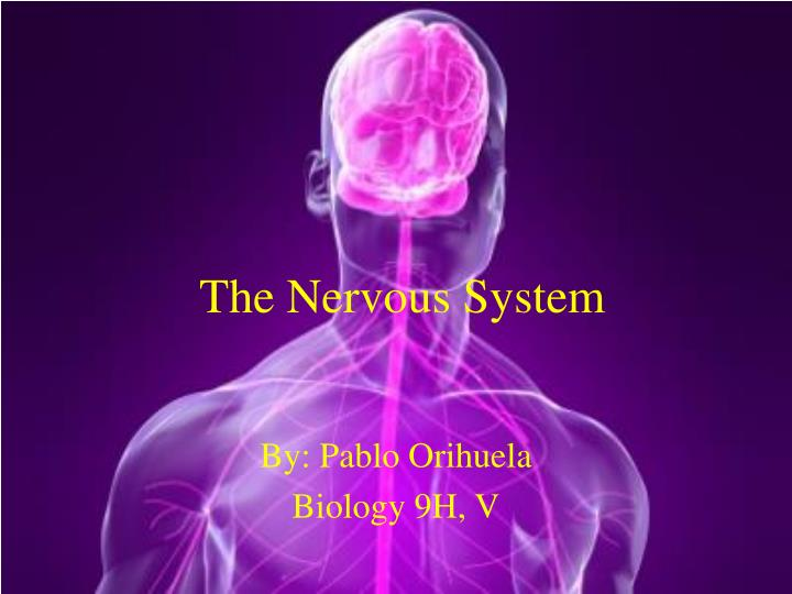 the nervous system n.
