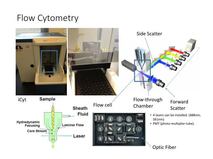 Flow Cytometry