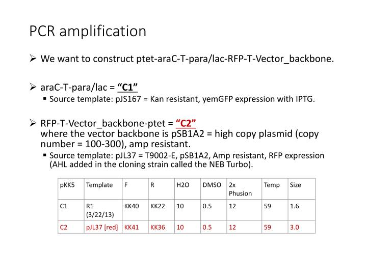 PCR amplification
