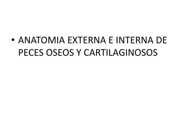 PPT - ANÁLISIS EN FRESCO DE PECES PowerPoint Presentation - ID:2269417