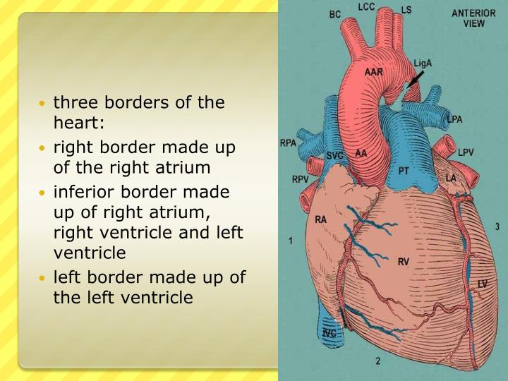 three borders of the heart: