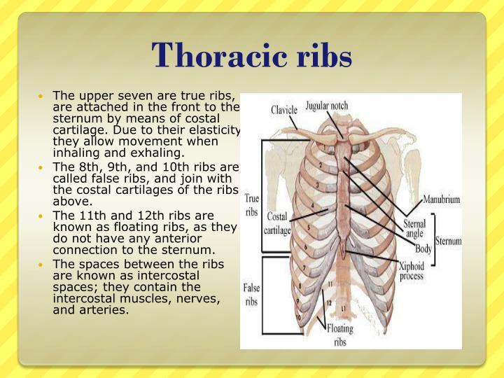 Thoracic ribs